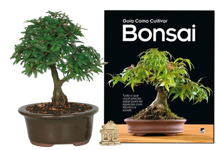 Foto do produto Kit Presente Bonsai Caliandra